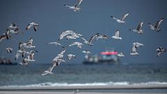 NORDIC BEACH (CUMBUGO) Tags: ocean light sea sun sunlight color bird beach water strand contrast boat rotterdam sand nikon ship seagull 300mm nikkor f28 maasvlakte d800 d800e