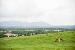 hiruzen/run (Nazra Zahri) Tags: summer mountains japan 50mm nikon raw farm nikkor okayama 2014 50mmf14d hiruzen d700