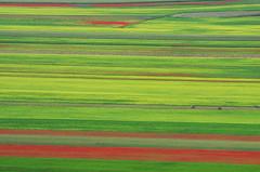 IMGP2107 (Fabio Di Giorgio) Tags: colore pentax umbria k5 norcia castelluccio fioritura