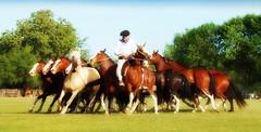 Manos blancas y vendadas (Eduardo Amorim) Tags: horses horse argentina criollo caballo cheval caballos cavalos pferde herd cavalli cavallo cavalo gauchos pferd pampa hest hevonen chevaux gaucho  hst gacho  campero provinciadebuenosaires  gachos  sanantoniodeareco  areco gregge crioulo troupeau caballoscriollos herde criollos  tropillas pampaargentina camperos tropilhas tropilla  crioulos cavalocrioulo tropilha caballocriollo campeiros campeiro eduardoamorim cavaloscrioulos pampaargentino