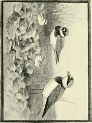 Anglų lietuvių žodynas. Žodis apish reiškia a 1) beždžioniškas; 2) beždžioniaująs, kvailas lietuviškai.