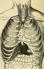 Anglų lietuvių žodynas. Žodis mediterranean anaemia reiškia viduržemio jūros anemija lietuviškai.
