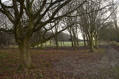 Bare (niknak2016) Tags: bare baretrees winter seasons treelife tree trees hills countryside forest woods beautyinnature naturalbeauty nature naturephotography gloucestershire dark field