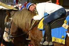 Ganzenrijden (9) Goose pulling (9) (Breboen) Tags: ekeren gans goose sleep paard man men horse rest animal love sweet fun cap ride back saddle cuddle hug tradition folklore explore 4 belgium