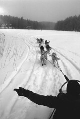 next one to the right (Ioannis the graecum) Tags: canon a1 agfa scala 200 iso 35mm f2 ssc fd lens epson v850 photostudio13 helsinki finland nuuksio husky sledge ride frozen lake