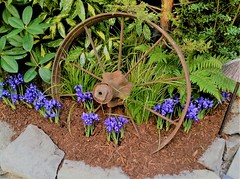 little irises, wooden wheel rim display
