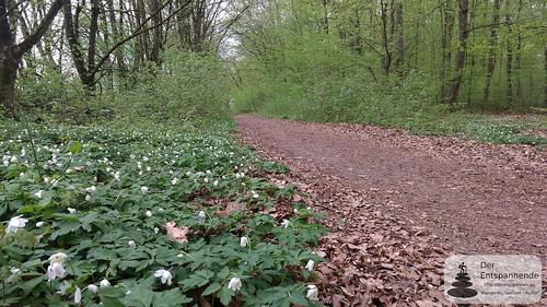 Wanderweg und Joggerweg im Ober-Olmer Wald