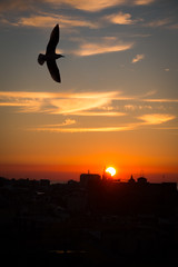 Both the condition of and limit to self understanding (hjl) Tags: morning silhouette barcelona bird columbus city sunrise spain europe sky clouds