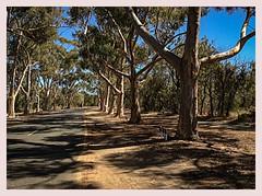 IMG_1512 (ikkio_too) Tags: kingspark perth australia ipad mini2 lightroommobile icolorama