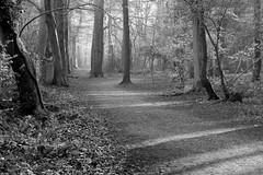 Shadows and light (John (thank you >1 million views)) Tags: 7dwf monochrome bw blancoynegro blancetnoir landscapephotography trees leighwoods nationaltrust somerset bristol southwestengland england