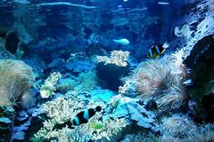 DE PASEO (antonio616) Tags: zooaquariumdemadrid zooaquariumofmadrid acuario aquarium