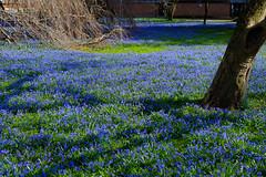 2017-03-12 Karlsruhe Blaues Wunder 0002.jpg (marathon.michael) Tags: schlosparkkarlsruhe 2017 orte einrichtungen jahreszeit badenwürtemberg park frühling karlsruhe deutschland sehenswürdigkeit zeit