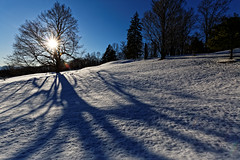The long shadows of the evening (aleadam) Tags: tree shadow slope snow winter evening sun cold light streak branch 7dwf aleadam alejandroadam