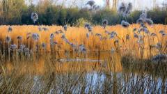 Roselière (Raymonde Contensous) Tags: parcdeschantereines nature roselière roseaux lacs hautsdeseine villeneuvelagarenne gennevilliers paysage