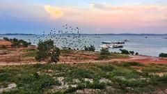 Swarm of birds (MF Alfath) Tags: batam centre center harbour pelabuhan sore afternoon bird swarm moment landscape ocean sea boat
