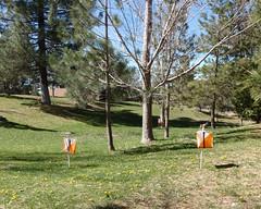 002 Count The Controls (saschmitz_earthlink_net) Tags: 2017 california orienteering campscherman girlscoutcamp sanbernardinonationalforest sanjacintomountains laoc losangelesorienteeringclub