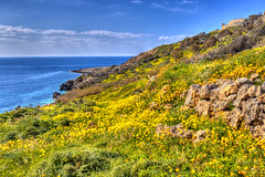 The yellow field (Majorimi) Tags: canon eos 70d digital color colorful nice malta sea sky blue green bay rock mountain gozo island weather spring field flowers view hdr meadow
