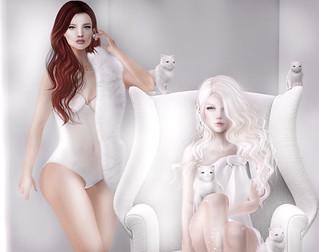 ~ Pussycat Dolls ~