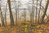 River Bluffs (Tony Webster) Tags: frontenac frontenacstatepark lakepepin minnesota mississippiriver earlyspring forest leaves spring statepark trees unitedstates us