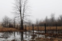 reflecting on winter (s@ssyl@ssy) Tags: gloomy rainy foggy barren spring puddles farmersfield fence reflection