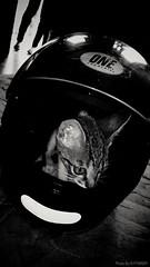 Kid's toy (PY6RDM) Tags: cat gato pretoebranco preto branco bw motog4plus moto