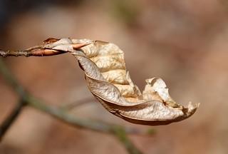 Last years leaf