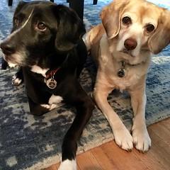 Mesa and Lola.