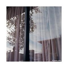 (Daiku_San) Tags: film ishootfilm colorfilm mediumformat usetheforce 120film 6x6 wlf tlr reflections medfordoregon rolleiflex28c carlzeissplanar8028 kodakektar100 epsonv500
