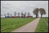 Captrain 1618+DBC 6493+6402+6404+RTS 1374 te Eempolder (MyronvRuijven) Tags: transport loc trein 6400 terzijde polden dbc polska rail eempolder polder nederland ns rts 1374 captrain ct railion geel grijs