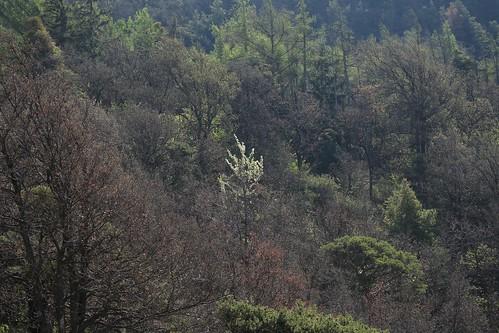 belle forêt en éveil