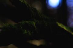 """im April - Meyer-Optik Görlitz Primotar f=135 1:3.5 (alex """"heimatland"""") Tags: tags hinzufügen beta cunewalde oberlausitz 35 135mm primotar görlitz meyeroptik 35135 135 meyeroptikgörlitz meyer m42 veb feinoptisches werk verschwommen makro"""