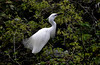_DSC0021 Egret (tsuping.liu) Tags: outdoor organicpatttern birds plant photoborder perspective pattern photographt passion photoboder painting photos nature natureselegantshots naturesfinest ecology