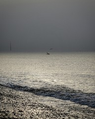 swimmer : seagull . #Southsea #seafront #shadesofgrey #murky #melanoid #mist #swelling #surging #sea #afar #apart #alone #sleek #soundless #silent (jon_tyrrell) Tags: sea murky seafront shadesofgrey southsea swelling melanoid silent soundless afar mist sleek apart alone surging