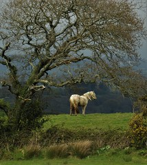 Wind Blown Horse (howell.davies) Tags: weather sun sunshine wind movement landscape tree field horse animal nature wildlife hendy wales uk nikon d3200 tamron 70300mm easter