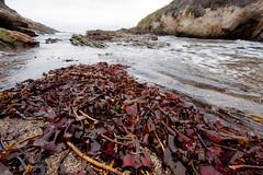 DSC00022 (eddyizm) Tags: a100 alpha california camping coast eddyizm eduardocervantes morrobay ocean pacific sony waves