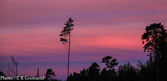 Twilight (2000stargazer) Tags: grimseid bergen norway twilight sunrise morning dark light silhouette purple landscape nature trees canon