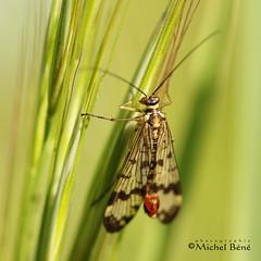 joueuse de harpe (studio gimi) Tags: papillon butterfly insecte nature grosplan planrapproché depthoffield profondeurdechamp macro natur extérieur outdoor sigma105mm canoneos