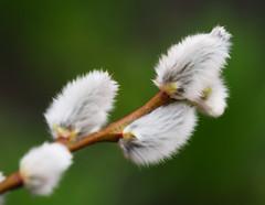 Wiosna Frühling Spring (arjuna_zbycho) Tags: kwiaty blumen flower zachódsłońca sonnenuntergang sunset sunsets sunrises clouds sky himmel atosphericclouds chmury wolken niebo bazie