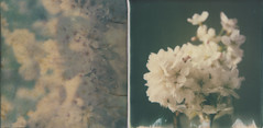 Immersion (l'imagerie poétique) Tags: limageriepoétique poeticimagery roidweek2017 polaroidweek diptych sx70 600film impossibleproject manipulatedfilm