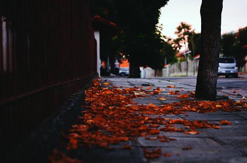 15/52 Por fim, outono.