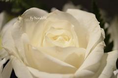 Flowers (Norah_Studio) Tags: flowers light roses white green nature colors beautiful leaves rose nikon crystals daisy pure d5100 nikond5100 d5100nikon