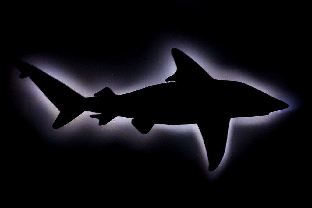Here Sharky Sharky Sharky