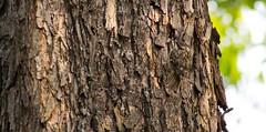 Follow me (liberoilverso) Tags: bird nature canon natura uccelli albero canoneos legno uccello volare naturale canoneos1100d