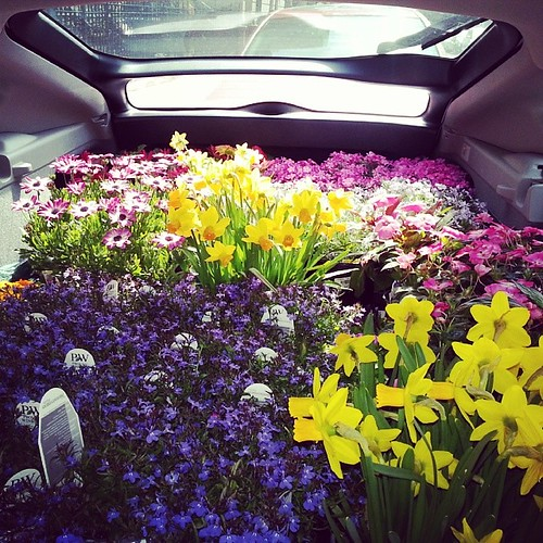 #trunk #full of #flowers