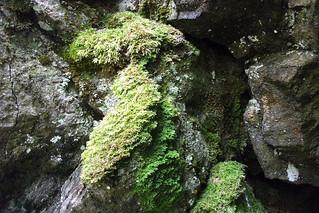 Vegetation on The Quiraing