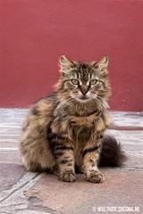 WS20140429_7066 (Walther Siksma) Tags: venice italy cat kat venedig burano 2014 veneti