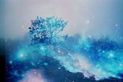 beacon hill (whiplash.girlchild) Tags: trees film stars photography doubleexposure space victoriabc