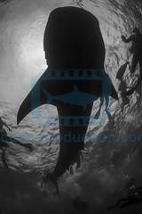 2013 10 VOISIN MALDIVES-0463