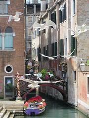 Möwen - seagulls in Venice (meret.fuchs) Tags: venice seagull romantic möwe venedig romantisch