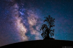 My Favorite Tree (Silent G Photography) Tags: california nightphotography tree wine right astrophotography stuff nightsky really centralcoast templeton winecountry vino pasorobles milkyway reallyrightstuff rrs centralcoastwine 2013 nikond800 markgvazdinskas silentgphotography silentgphoto